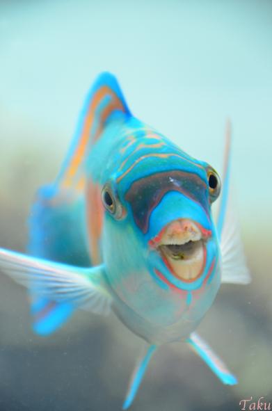 清涼の笑み 葛西臨海水族園
